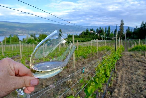 WS - switchback vineyard